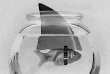 poisson d'avril / et des autres mois