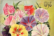 Seed Packets and Botanical Prints / by Bridget