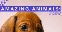 Amazing Animals / All the cute animals - all in one place!