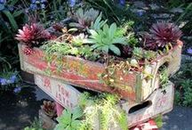 Junk Gardening / Lots of great DIY projects and craft ideas using junk and repurposed items in the garden! / by Pam @ House of Hawthornes