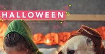Halloween / All the tricks and treats GMA has collected to make your Halloween the best one yet!