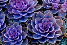 succulents / by Cherona Micklish-Pyles