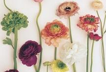 { plants + garden } / by Britta Hoffman