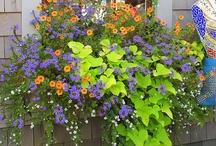 Garden Ideas / by Bobette Maier