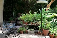 Let's Garden!