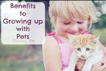 Pets and Animals / Pets, Cats, Dogs, Animals