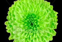 Love lime green / by Tracy Berry Bartlett