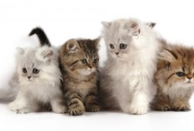 Cats, Kittens, and Puppies / by Lucy Ioakim
