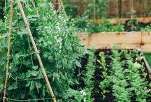 .for the garden.