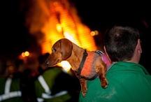 Dogs of Dartmouth / by Dartmouth Alumni