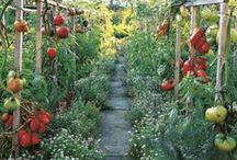 dream garden / by Christine Ricketts