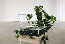 Grijsgroen | sprout