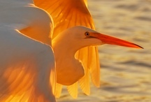 Wings / Photography - Birds / by Brenda Simmons