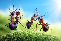Andrey Pavlov Mastery / Russian photographer Andrey Pavlov has developed the macro-photo series 'Ant Tales'. The whimsical compilation of images pictures ants captured in moments of spontaneous or choreographed play. Many images picture the bugs using props Pavlov has crafted from raw materials such as berries or nut shells.
