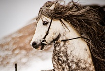 My Love For Horses ~~~~