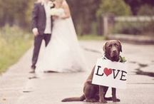 Precious Wedding Pets / Adorable ideas on how to include your perfect pet in your wedding day plans.