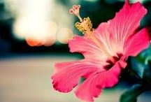 Nature: Flower power