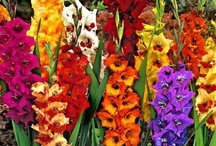 Rainbow of Flowers / ...Flowers come in many Colors... -Weylan Tiankong