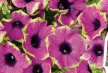 Garden Info, tips & blogs ... / to help create a beautiful garden