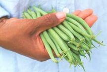 Garden Beans / Tips for growing green beans