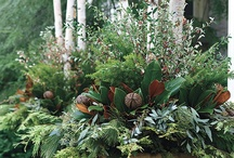 Fall & Winter Gardening ... / Ideas, tips and plants with fall & winter interest!
