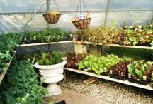 Edibles ~ Veggie Gardening / Grow your own healthy veggies!