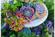 Sedums and Succulents / Gardening ideas for sedum and succulent plants