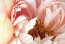 .Fleur.