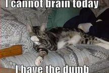 Animals / For the awwws / by Heather Hazen