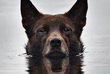 wild life / animals + dogs + wolves + nature + spirit