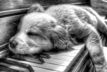 Cute Animals / by Nichole Thevenin
