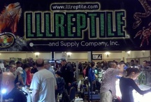 Reptile Expos  / Photos from the Expos we go to all over the country!