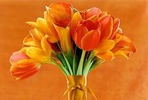 Tiptoe through the tulips!  / by Kristi Ray