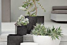 Flores y plantas / Ideas para el jardín.