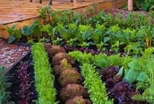 Gardening / by Brenda Jennings