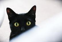Luna: