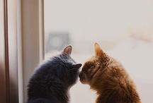 Cute Animals: