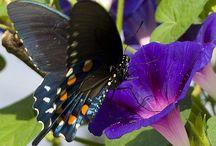 Butterflys, Dragonflies and Moths / Butterflys, Dragonflies and Moths / by Christine Haden