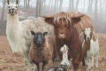 Animals on the farm / Animals you might see on the farm / by Christine Haden