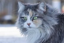 Furry & Feathered Friends / Cute critters that we love - cuddly cats, dogs, and other domestic pets, horses, and wild animals we admire from afar.
