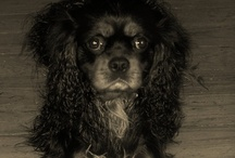 """Bark and Chatter / Let's see your most """"pinterest-ing"""" pooch pics! Visit us @ barkandchatter.com! / by Coralee Robichaud"""
