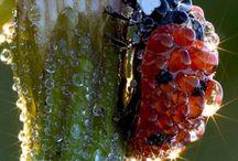 Beetles / Beetles / by Christine Haden