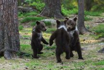 Bears / Bears / by Christine Haden