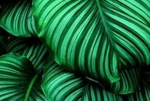 green glory / Rich, cool, minty, nature's tone - green in all its glory