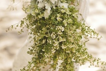 Wedding Ideas / by Ginger Sigman
