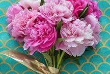 Peony Perfection / A showcase of beautiful perfect peonies.