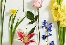 Floral Facts, Tips & Tricks / All things botanical; from gardens to botanical inspired artwork.