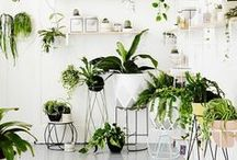 ProPlants / A collection of greenery and beautiful vegetation