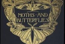 Butterflies / by Kelli Bentley