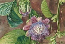 Art Journals Old Schol / Botanical Prints, Plates of Sea Life, Veggies, Fruits...I love the artwork of researchers!!! / by Patty Stagg